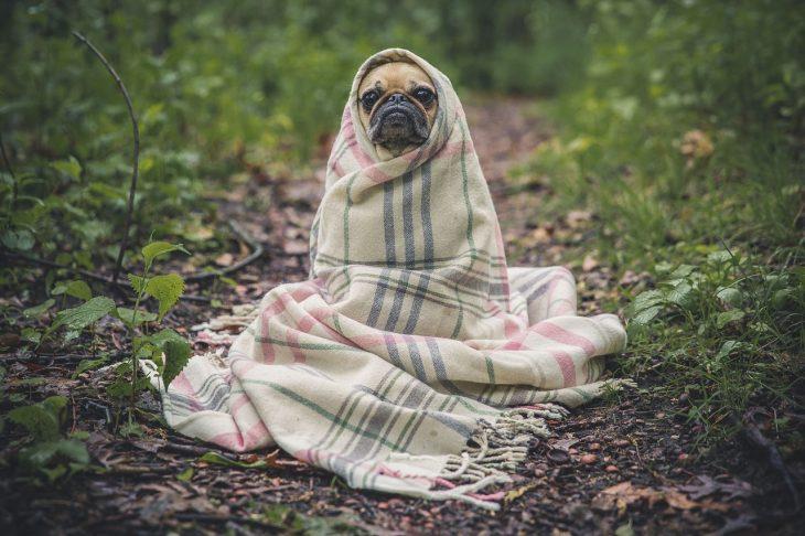 De plus en plus d'AINS sur le marché des anti-inflammatoires pour chiens