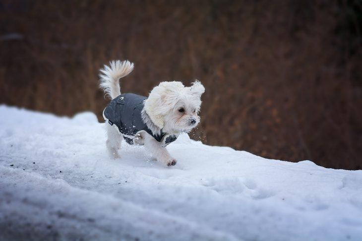 Offrir un cadeau à son chien : un manteau