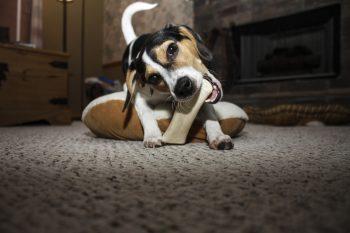 Des jouets pour chiot pour que l'animal ne mâche pas les meubles