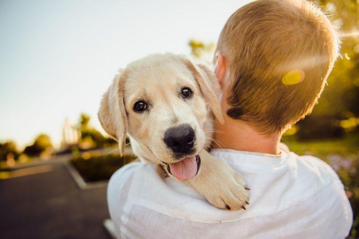 Comportementaliste: le spécialiste de la relation homme/animal