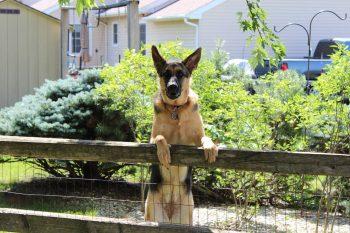 Qu'est-ce qui encourage l'agressivité territoriale du chien